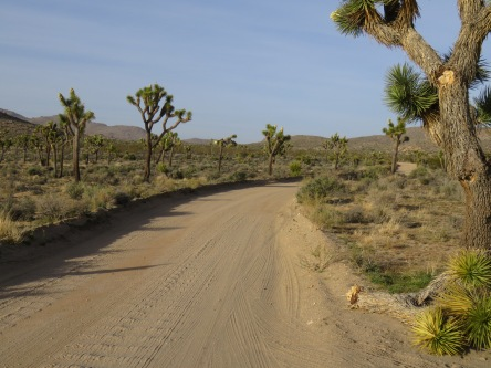 Desert Queen Mine Road leads into several trail heads, including Pine City, from Park Blvd.