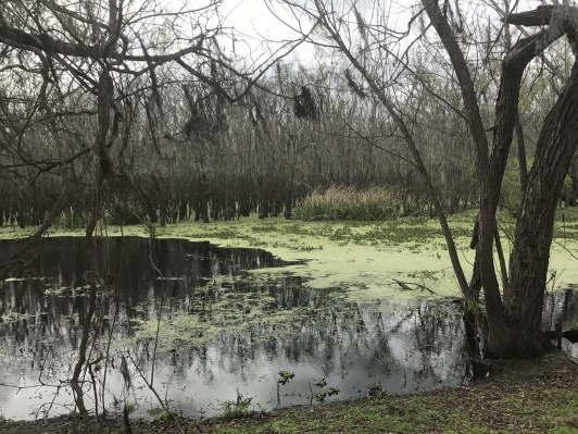 First striking scenery off of the Elm Lake Loop
