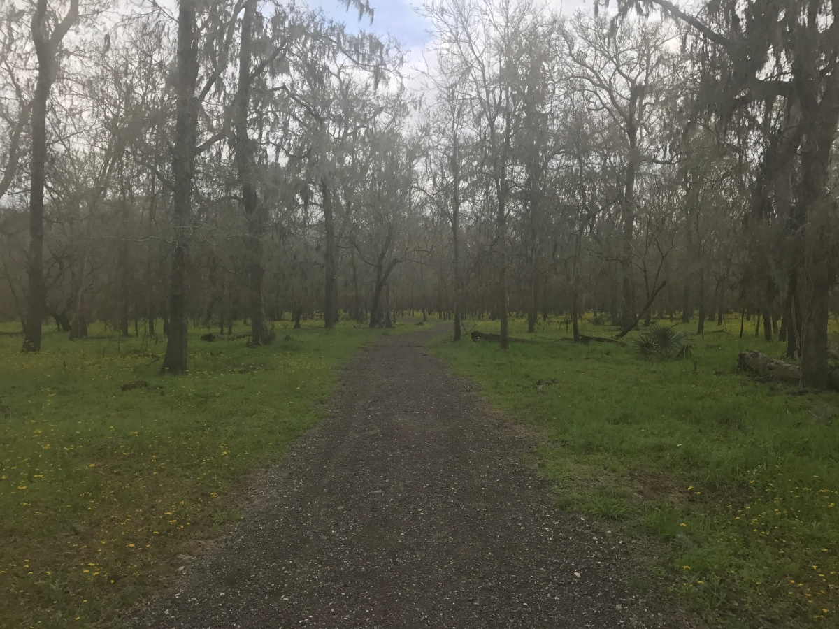 Trail Runs in Houston, TX: Cullinan Park and Brazos Bend State Park