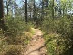 Trail Run & Training Progress