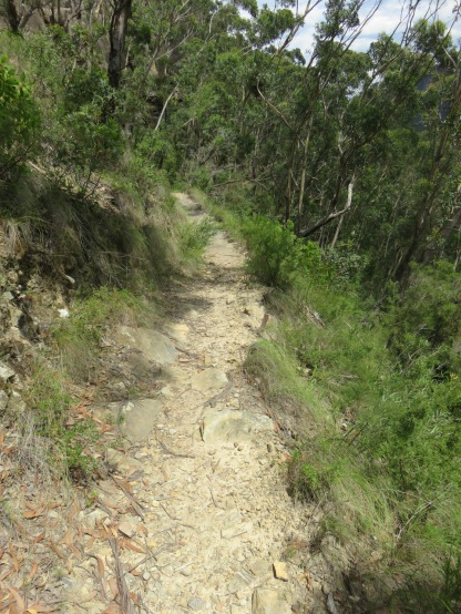 There was some single track that I was able to run.