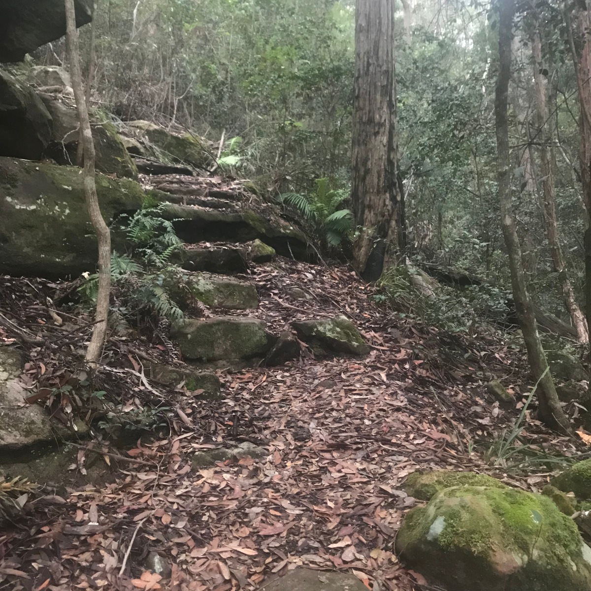 Trail Run in Australia: Blue Mountains, NSW Pt. 2